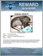 Animal Cruelty / Area of 1900 W. Bell Rd, Phoenix