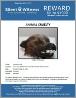 Animal Cruelty / In the area of 43rd Avenue and West Ocotillo Road, Phoenix