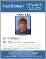 Fatal Hit and Run / Marc Tohe / 7100 W. Baseline Road